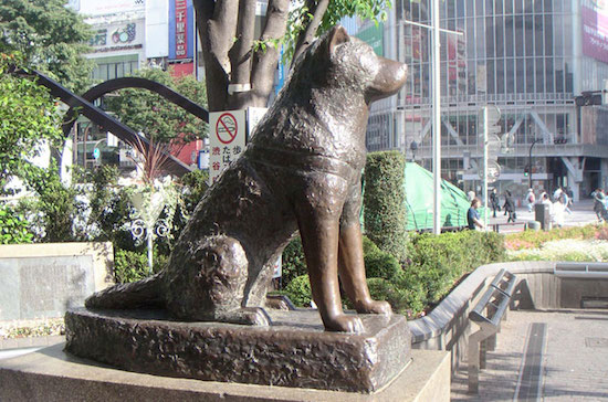 hachiko statue free things to do in shibuya