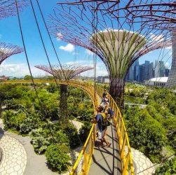 singapore amazing green landscape copy