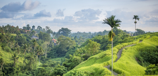 the campuhan hill to visit in ubud bali copy