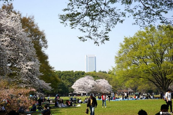 the gorgeous yoyogi koen in shibuya