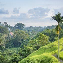 places to visit in ubud campuhan ridge